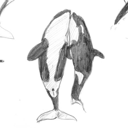 Back to the basics - cetaceans: orca thumbnail